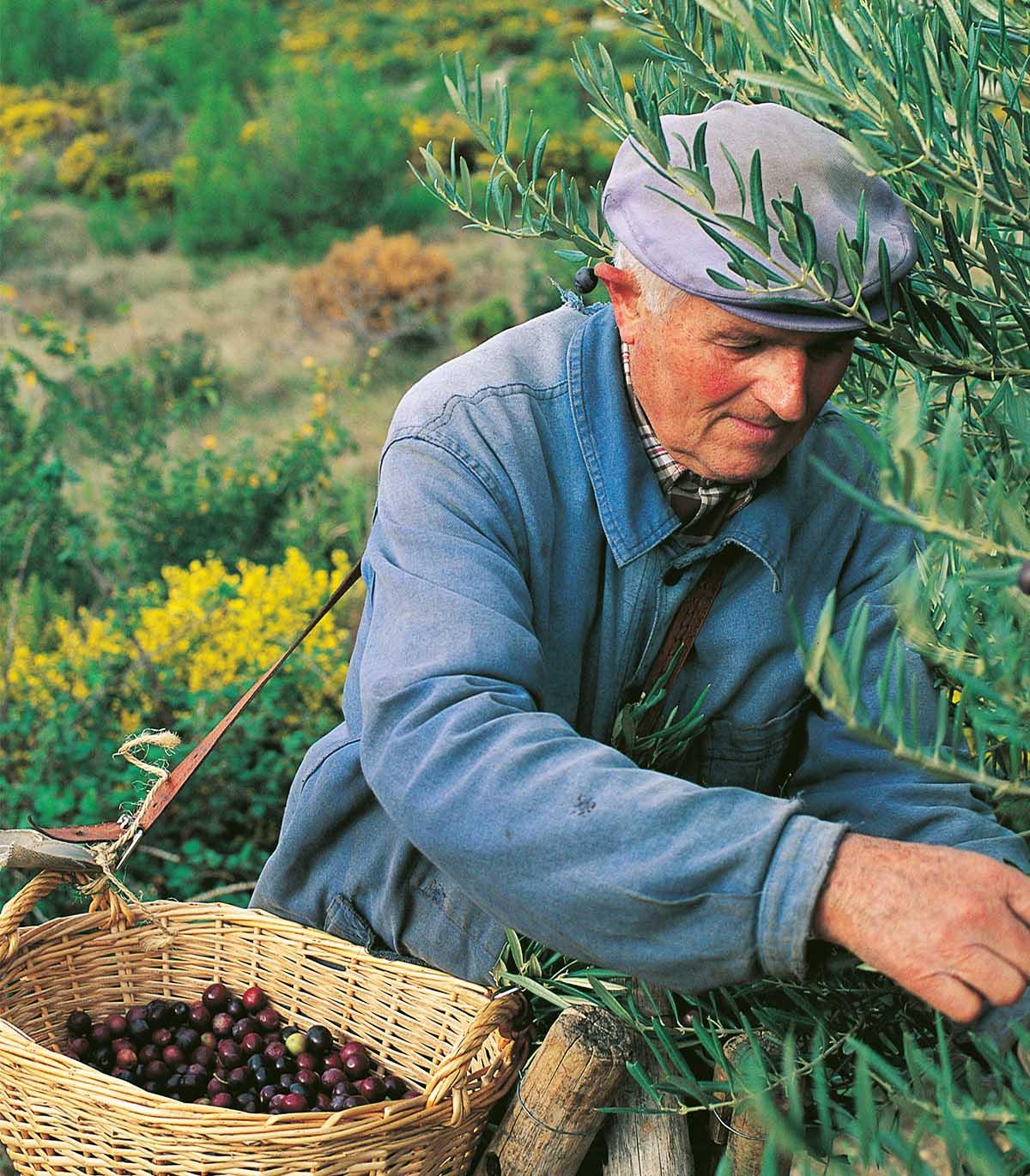 Huile d'Olive AOP de la Vallé des Baux de Provence